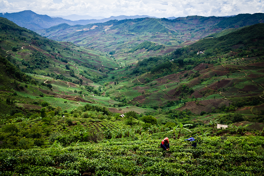 china-xishuangbanna-tea-fields-landscape