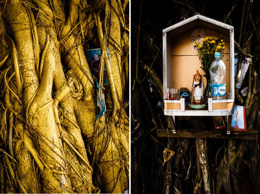 yangon-tree-details